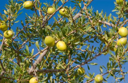 ABOUT BLOSSOM PURE MOROCCAN ARGAN OIL
