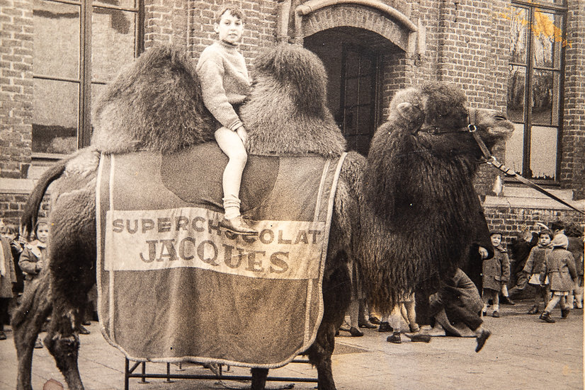 One Hump or Two 1950's!