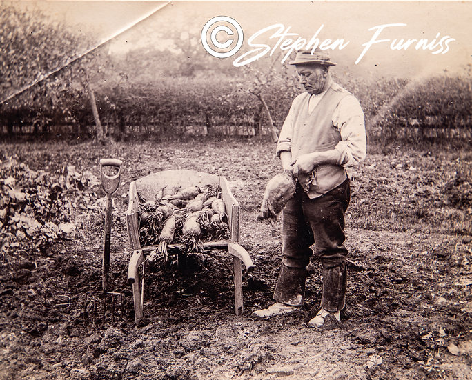 The Vegetable Grower c.1905
