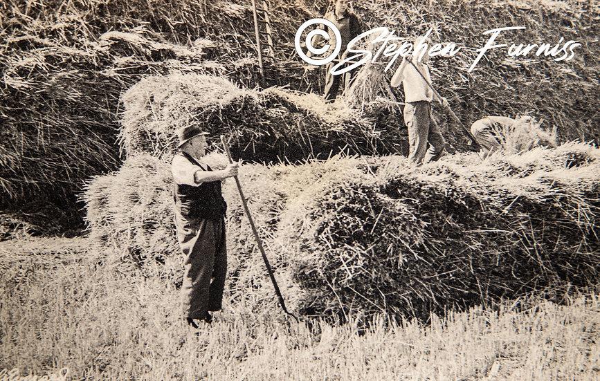 Haymaking 1950's