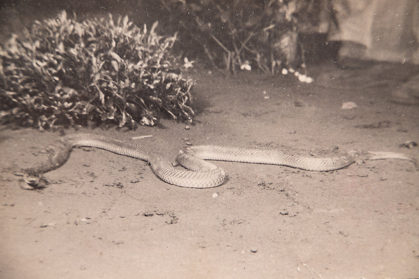 Boa Killed Outside Naafi 1950's