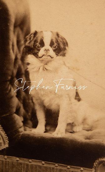 Pet Dog 1885