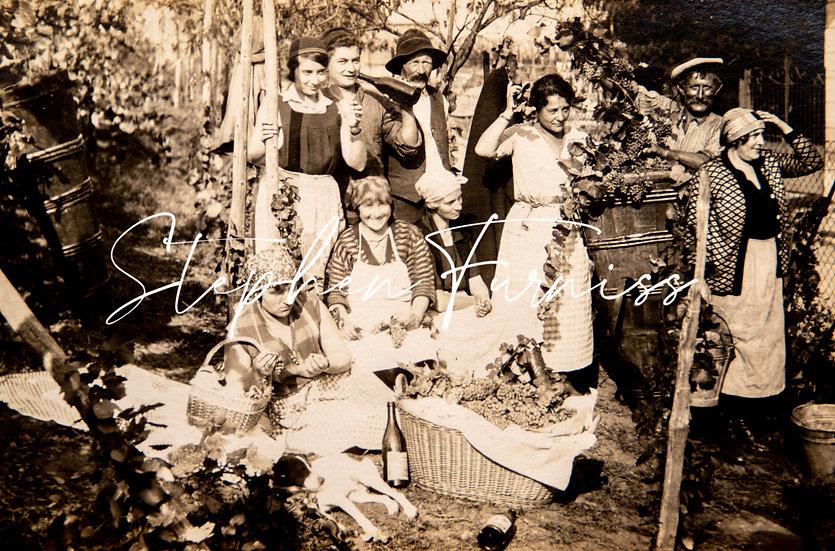 In The Vineyard 1920