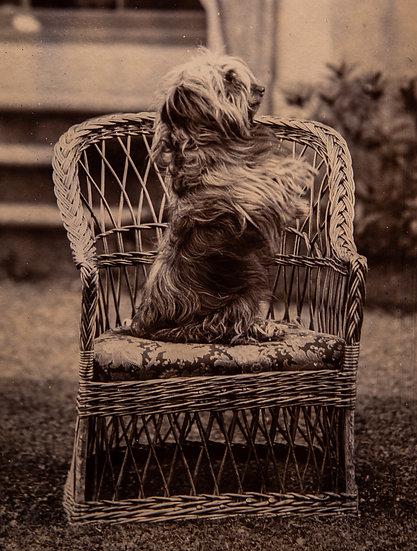 Beggins 1890