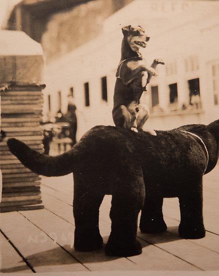 Photogenic Dog Margate 1930's