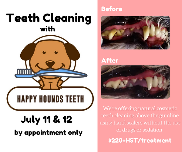 Teeth Cleaning Clinic-2.png