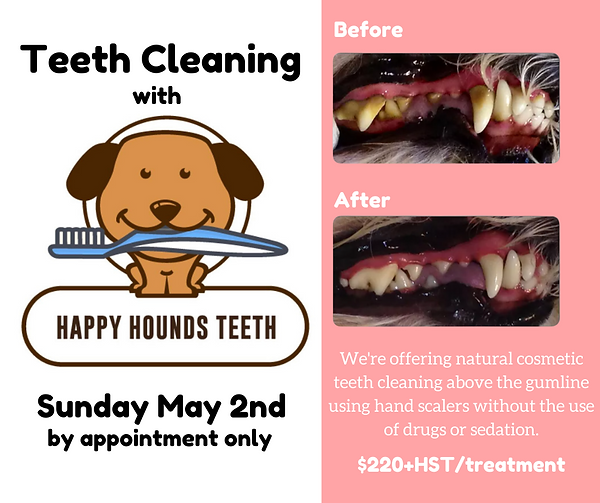 Teeth Cleaning Clinic.png