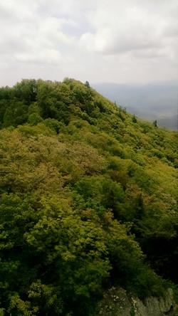 Forrest Mountain