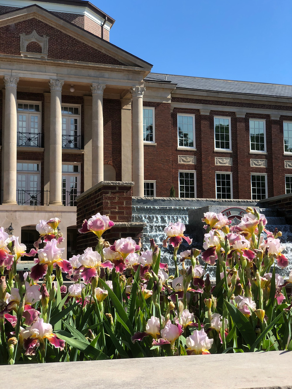 The front of Johnson Hall with Meredith's iris flowers in the foreground