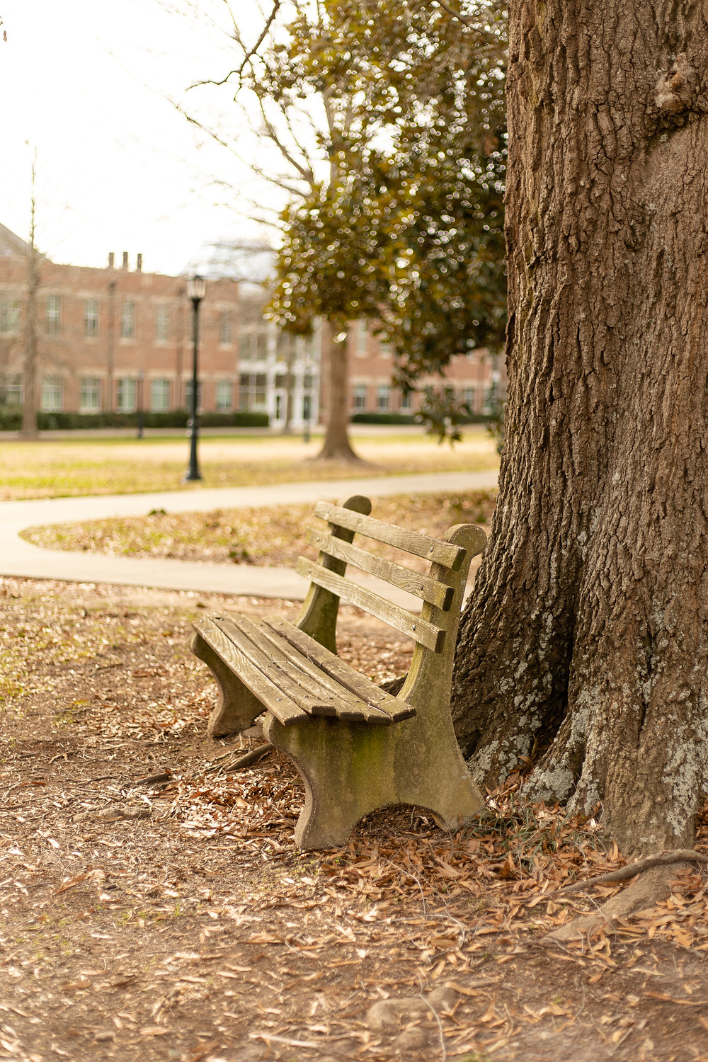 A bench by a tree on Meredith's campus