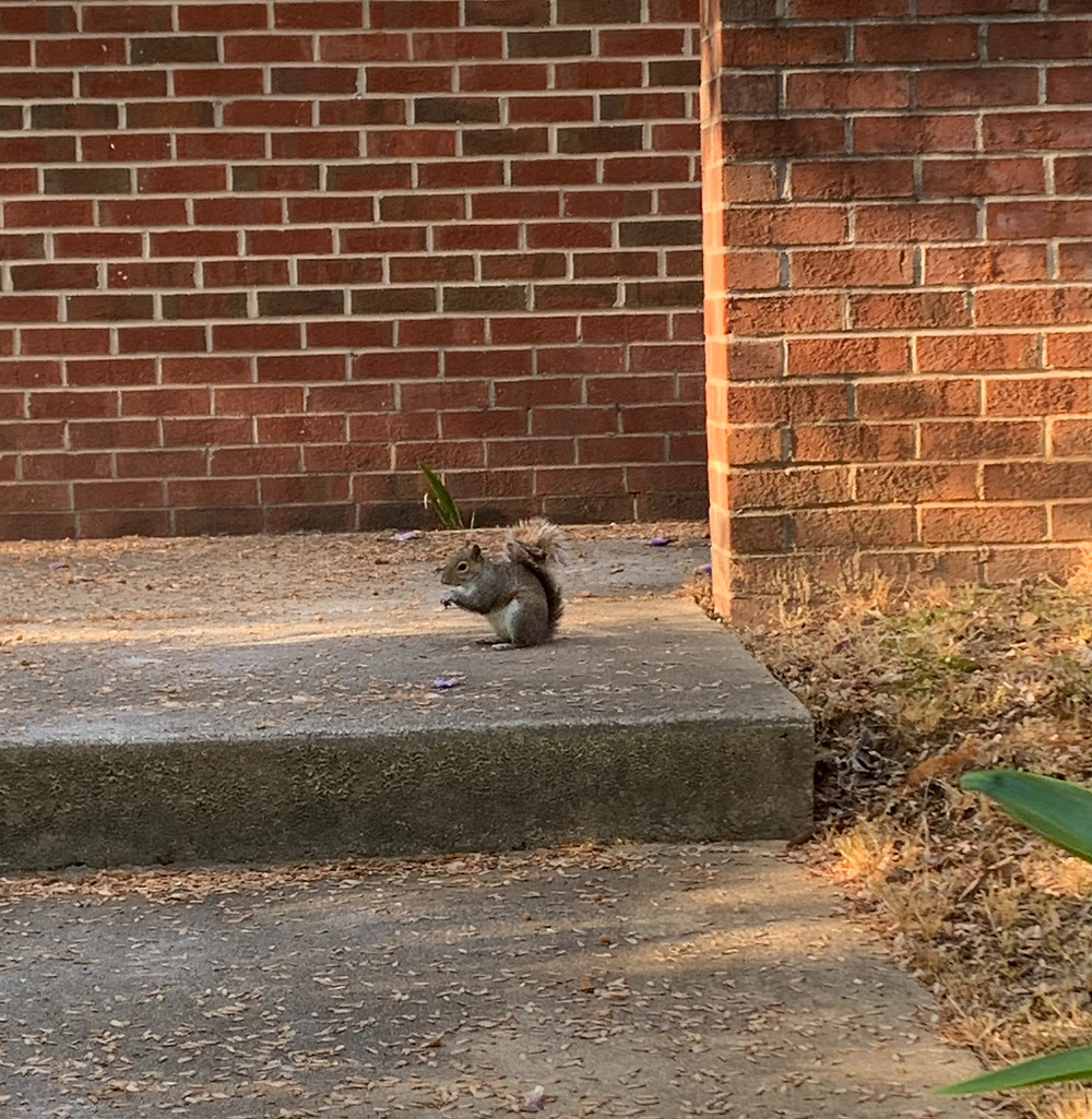 A squirrel leisurely sitting on steps