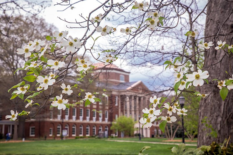 Johnson Hall behind dogwood flowers