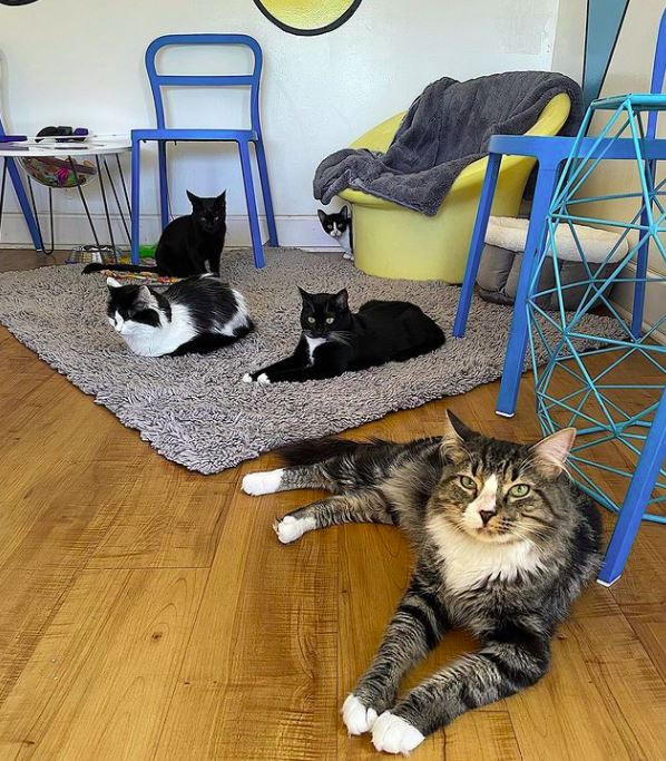 Several cats inside a coffee shop