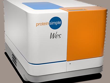 Webinar: Sua amostra de proteína merece a melhor detecção