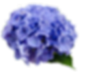 flower-2980200_960_720.png
