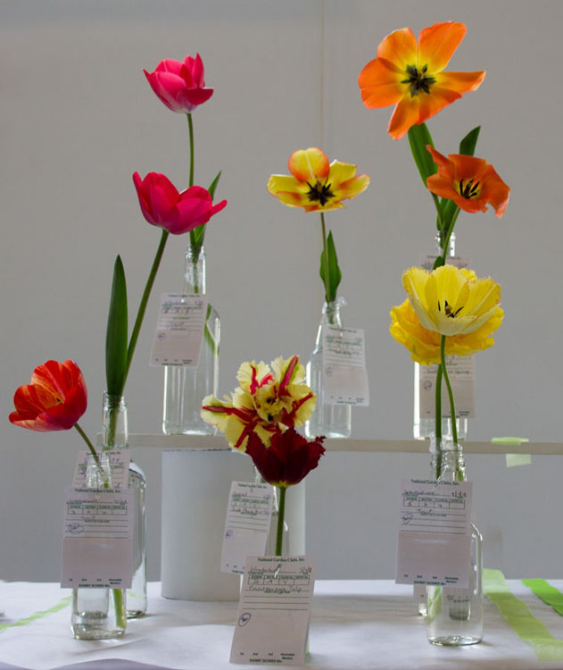 Small Standard Flower Show FGC (1)