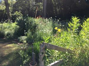 Josiah Dennis Manse Perennial Garden.JPG