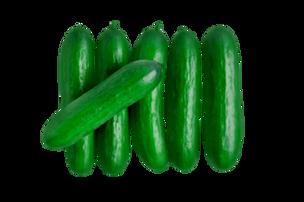 Mini Seedless Cucumbers