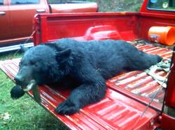 bear_hunt2010_001 (1)
