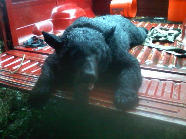bear_hunt2010_002