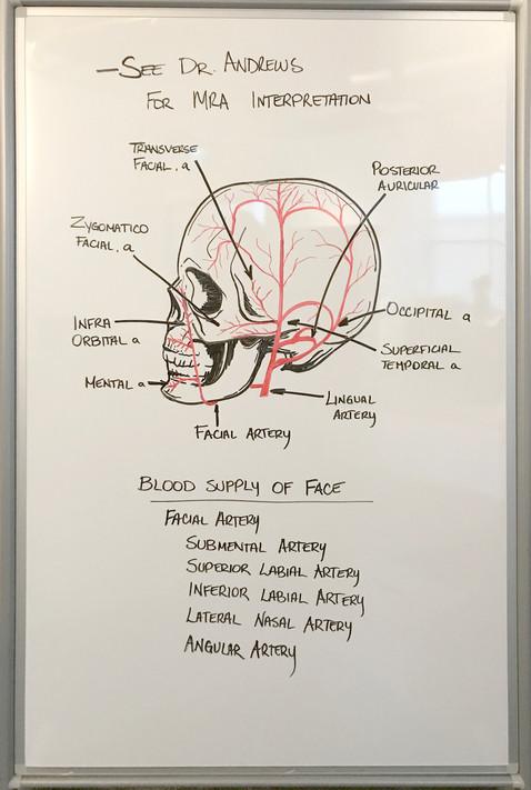 Whiteboard Medical Illustration