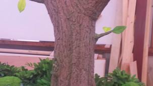 Big tree detail.
