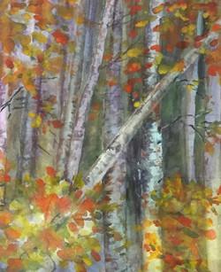 Lassrn Park Aspens, Watercolor $400