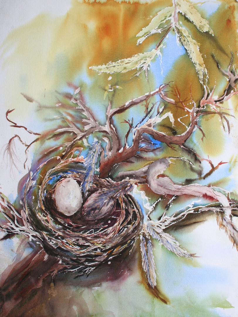 Amber Palmer, Bird's Nest,  Watercolor,