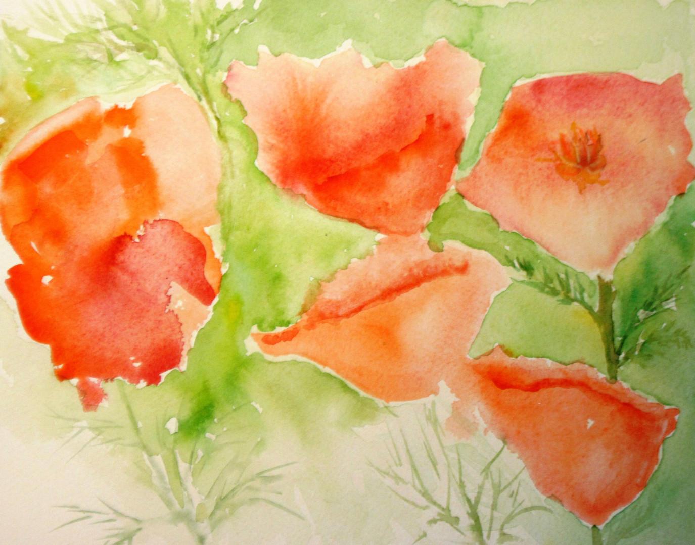 Poppies blooming.jpg