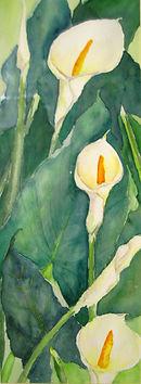 Calla Lilies enhanced.jpg