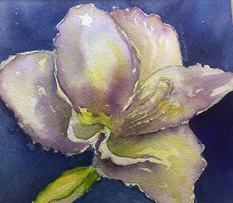 Amaryllis, Watercolor $35.00