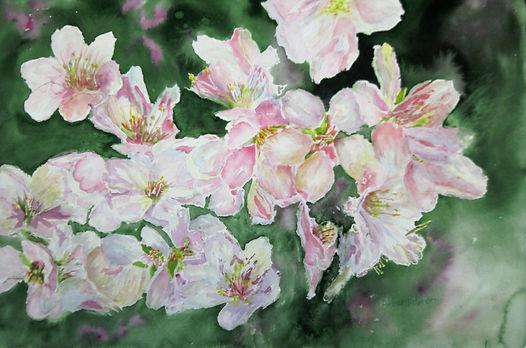 almound blossoms