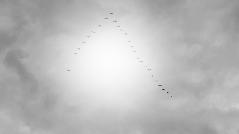 Birds BW 1.png