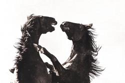 Slash&Baloo Fight