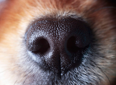 Sniffing is important for dogs