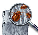 bed bug infestion allied pest control.jp