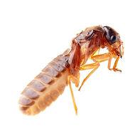 Termite Control pest control inspections california