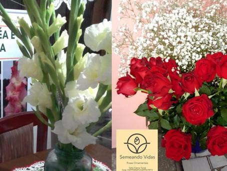 Produção de rosas em Piratini abastece mercado de três cidades