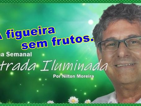 Estrada Iluminada: A figueira sem frutos.
