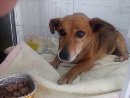 Ativistas do São Francisco de Assis se mobilizam para tentar salvar a a cadelinha Belinha
