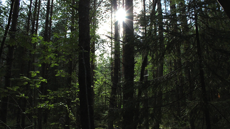 Forestflow