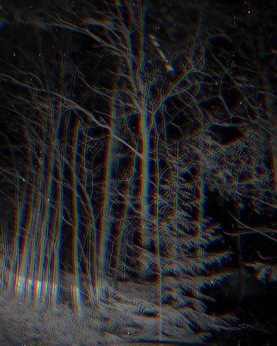 metsä_valokuva_glitch.jpg