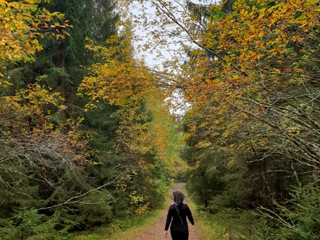 Luonto yhdistää – 8 näkökulmaa siihen, miksi läheisten kanssa kannattaa mennä metsään