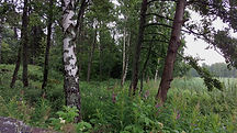 metsä, metsäkylpy, luonto, kesä