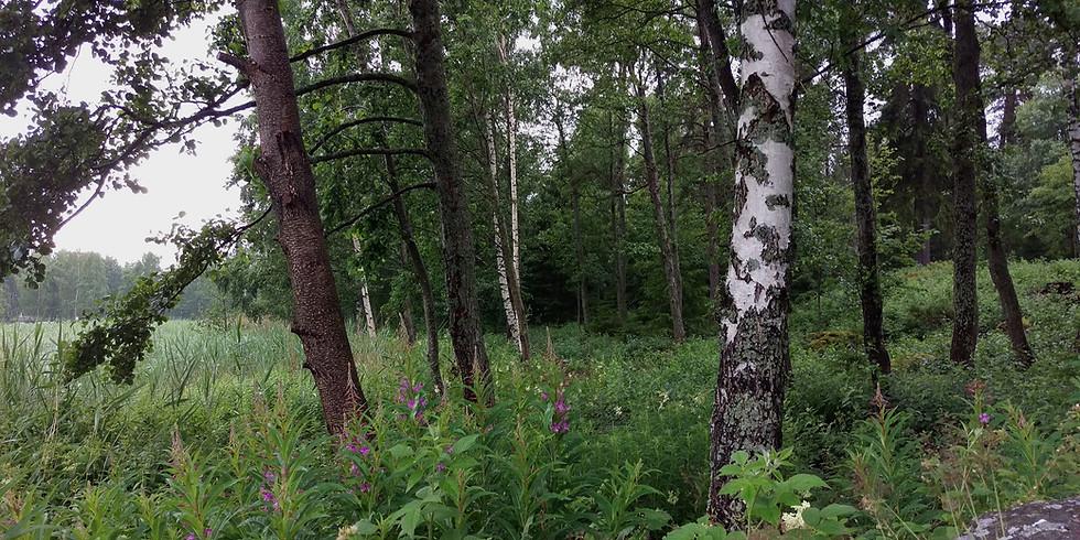 Kesäkuun Metsäkylpy