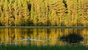 VIERASKYNÄ: Kaisa/Naturested