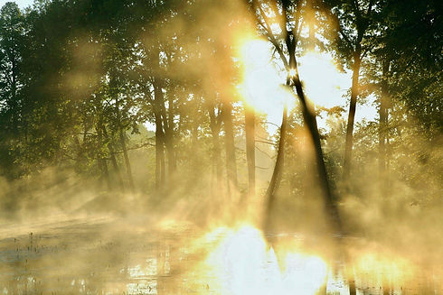 Forest-pond-on-a-foggy-morning-148985967