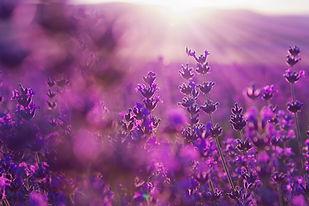 purple healer バスソーク.jpeg