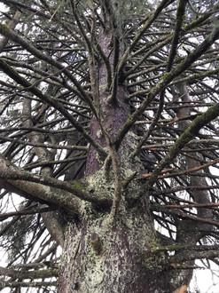 « notre » arbre