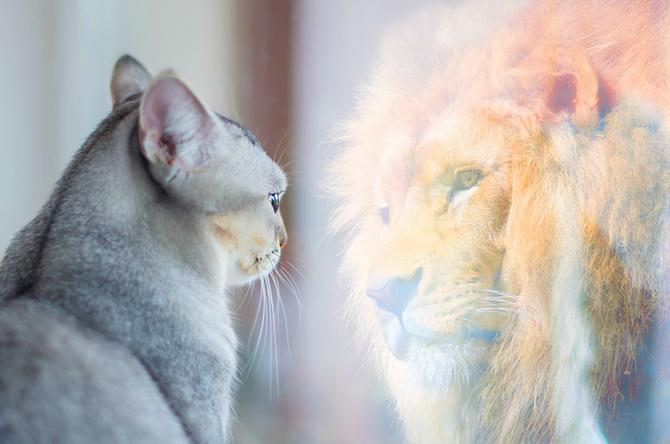 Miroir ô miroir